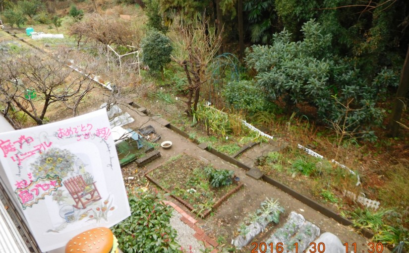 backyardfromveranda