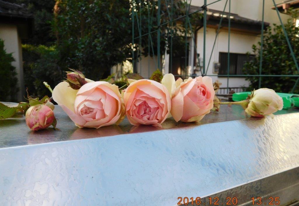 我が家の周りの花達