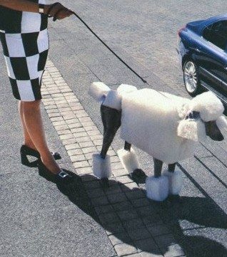 POODLE - CLIPPED SQUARE