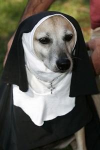 dc9cddf8a4d41f0a12a48b58a7dca82f--animals-in-clothes-funny-dog-costumes