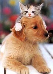 dog_catfriend1