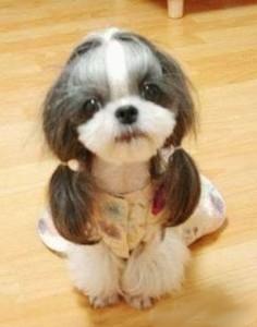 doghaircut
