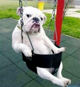funny-dog-amusement-park-610x659