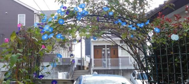ヘブンリーブルーat Entrance