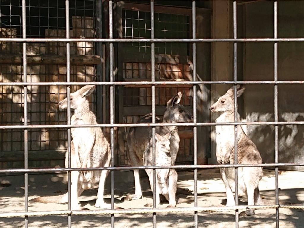 20191120上野動物園_191121_0024
