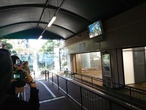 20191120上野動物園_191121_0078