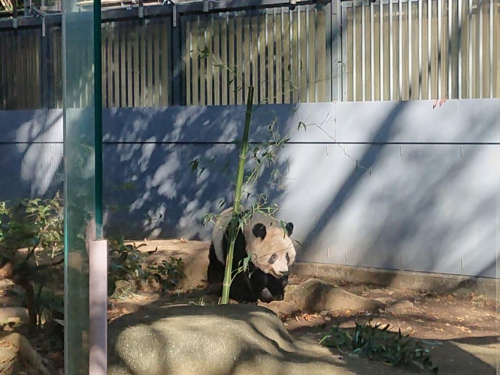 20191120上野動物園_191121_0067