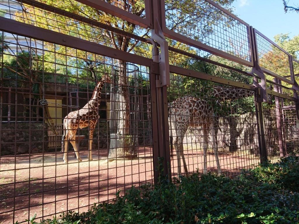 20191120上野動物園_191121_0019