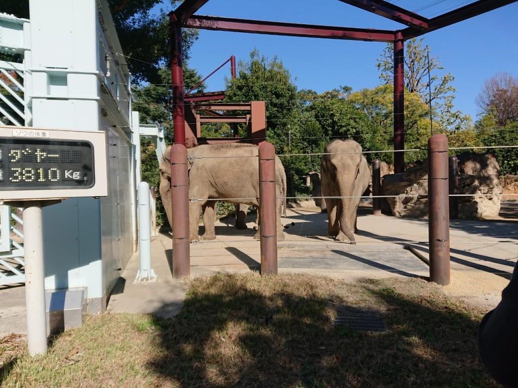 20191120上野動物園_191121_0027