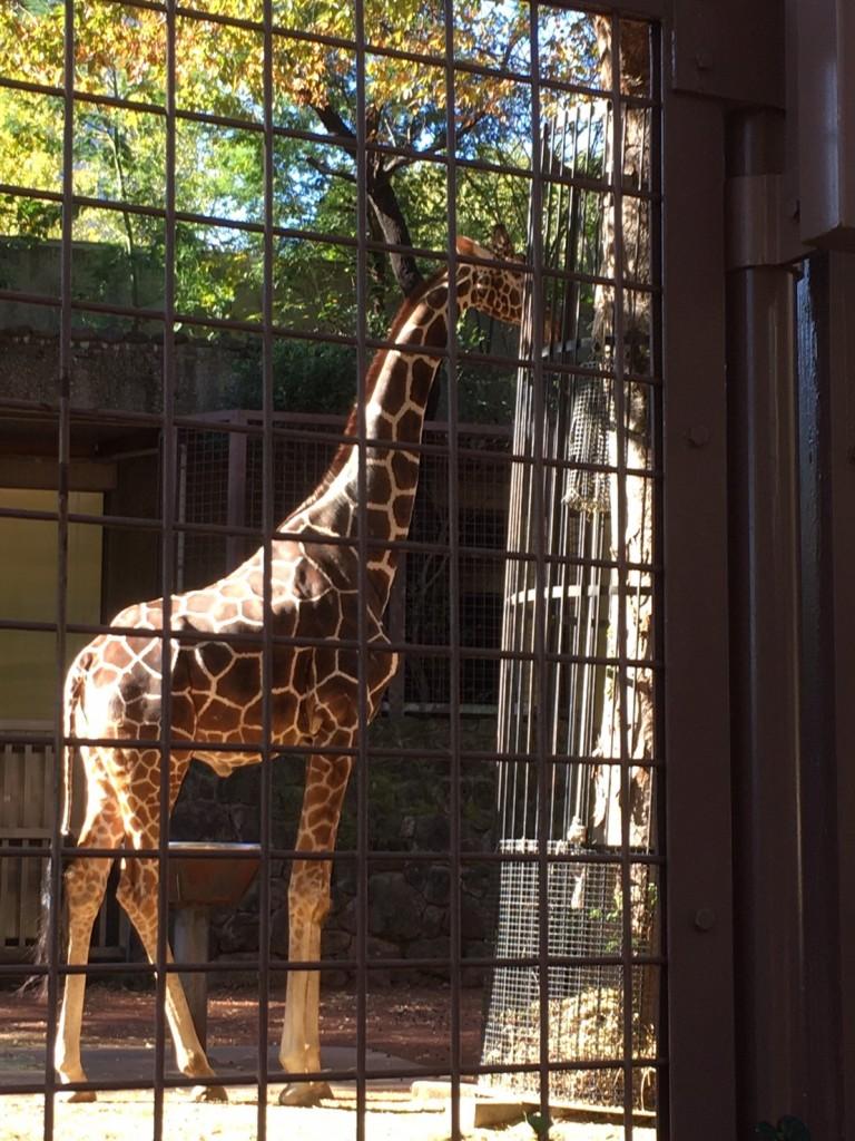 20191120上野動物園_191122_0089