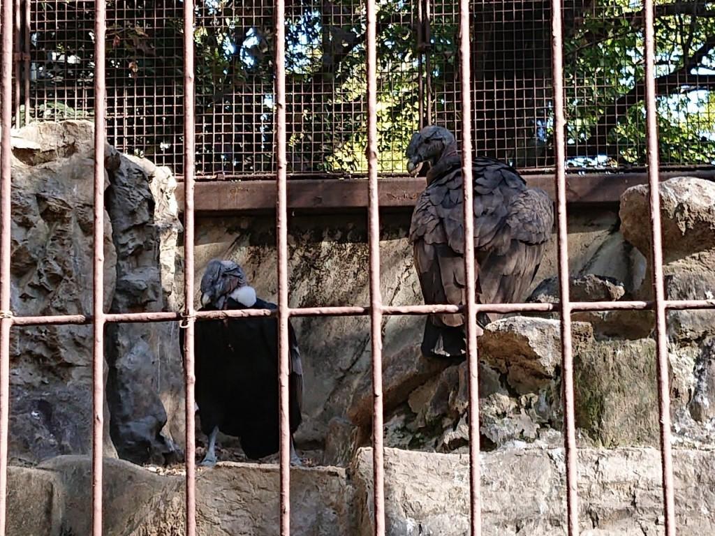 20191120上野動物園_191121_0042