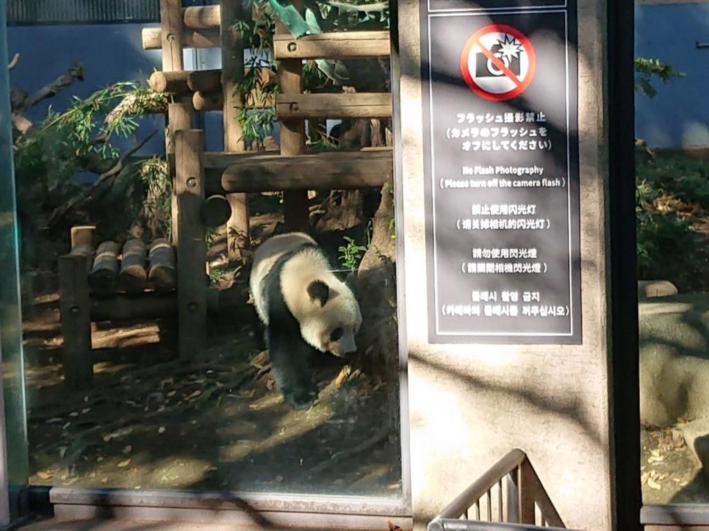 20191120上野動物園_191121_0074