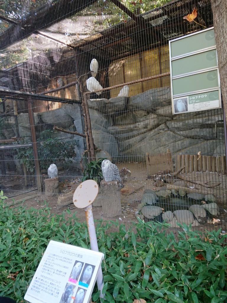 20191120上野動物園_191121_0050