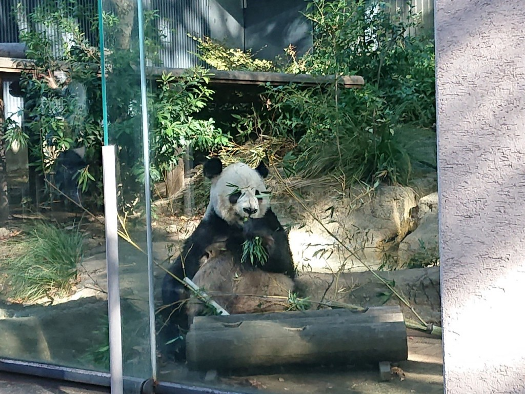 20191120上野動物園_191121_0062