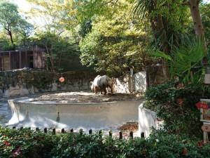 20191120上野動物園_191121_0018