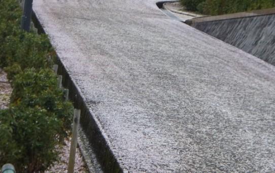 西山公園の桜の絨毯