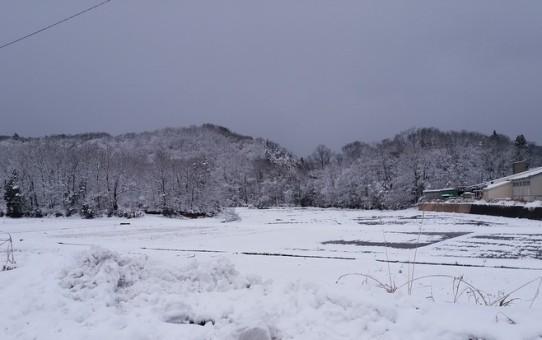 2017年1月23日 福井の冬景色-1