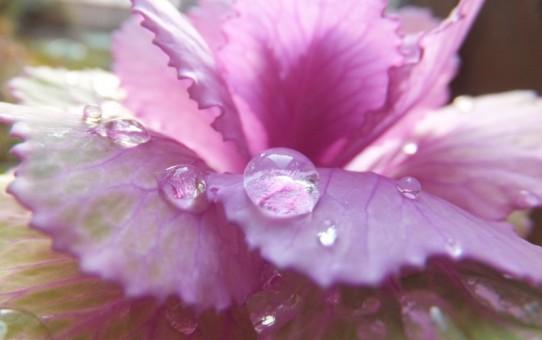 雨粒(神様のおしっこ)
