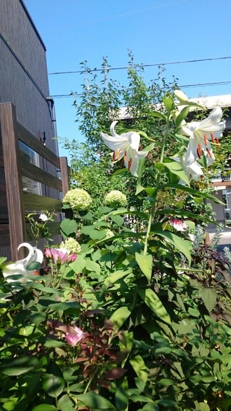 My Garden 2018年7月18日