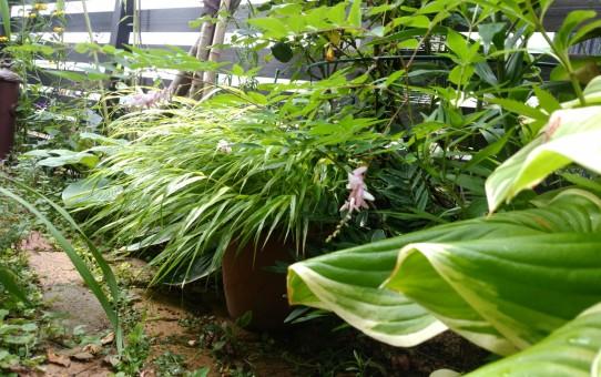 久し振りの雨に庭は生き生き