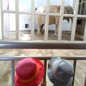 石川動物園。兄弟みたい