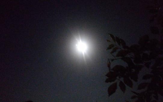 満月 トップ画像