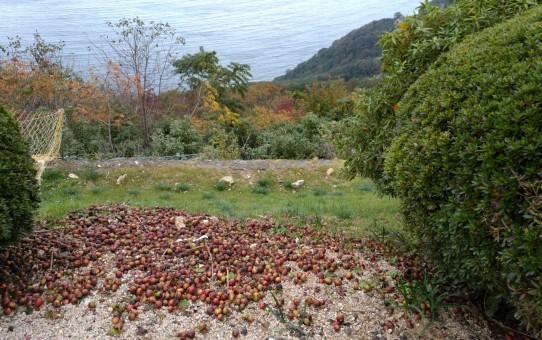 レインボーライン山頂のバラ園からの眺め
