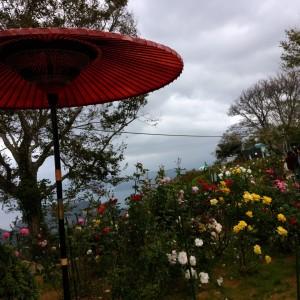 レインボーライン山頂公園のバラ園