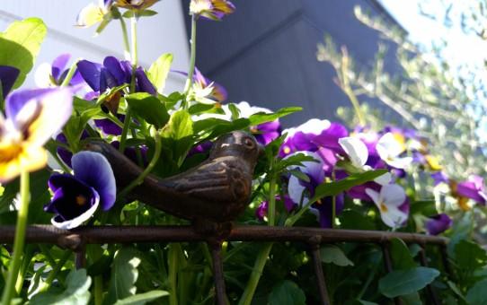 小鳥とビオラ