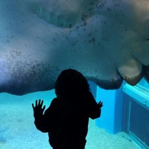 水族館「海遊館」
