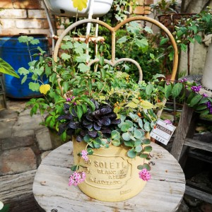 園芸店ロベリア 寄せ植え