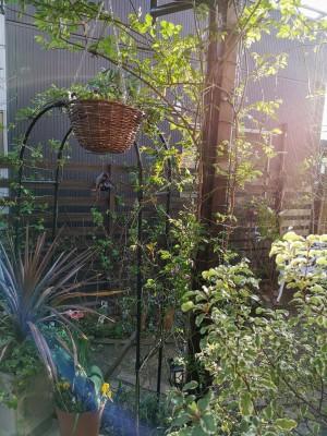 夕陽が差し込む庭