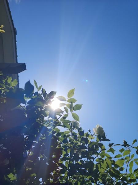 五月の朝の青空