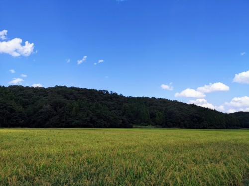 黄金色の田園風景