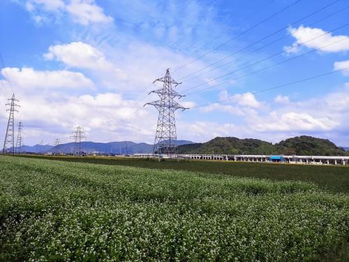 新幹線工事と蕎麦畑風景