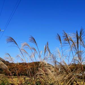 青空とススキの風景