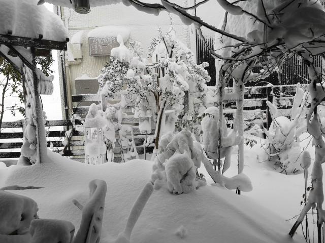 大雪に埋もれた庭