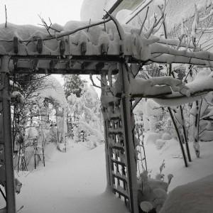 豪雪の日の庭