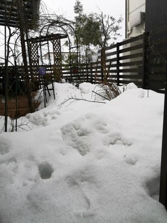 雪に埋もれた庭