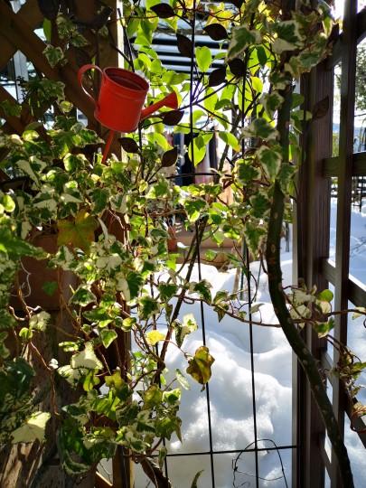アイビー越しに眺める庭