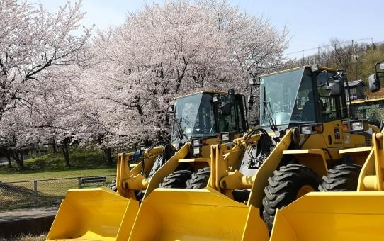 桜と除雪車