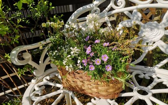 ベンチの上に寄せ植え籠