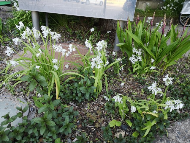 病院の花壇