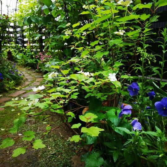 我が家の庭の小道