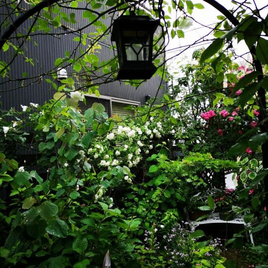 誕生日の日の庭