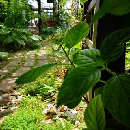 雨上がりの庭