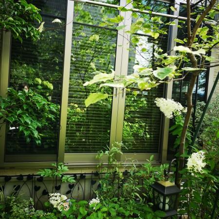 掃き出し窓に写る庭