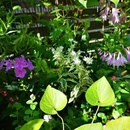 復活を始めた庭の草花たち