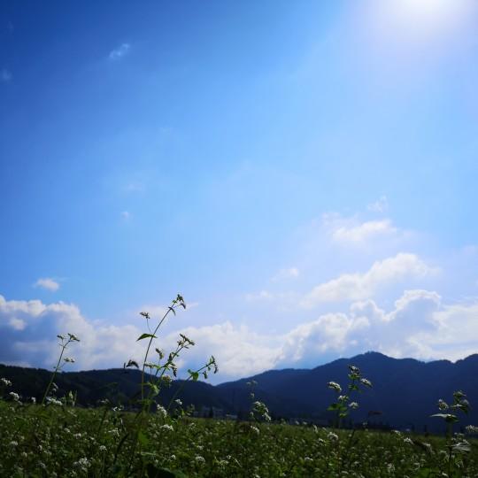青空とそば畑