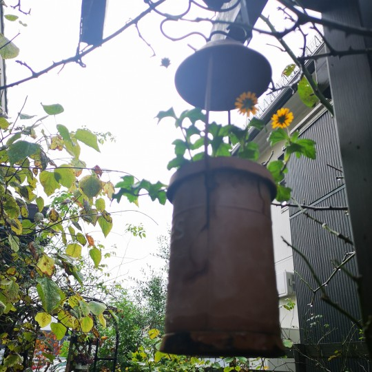 10月の庭